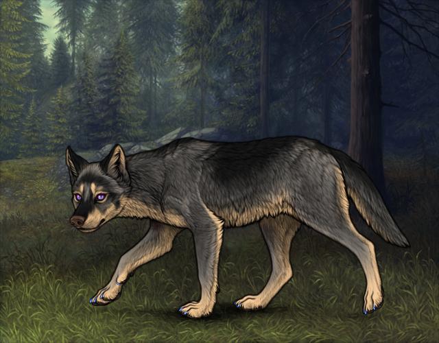 Random Wolf Image